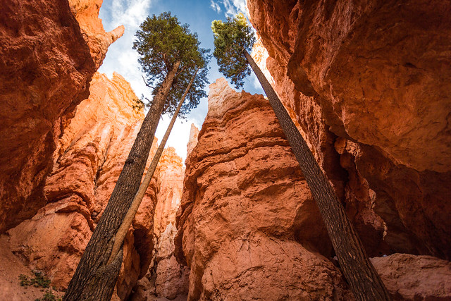 Navajo Loop, Bryce Canyon, Utah