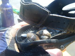 Shells in my Shoe