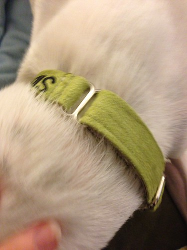collar 4