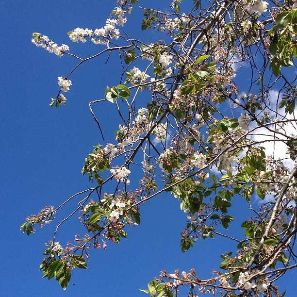 Tree & Sky (no filter)