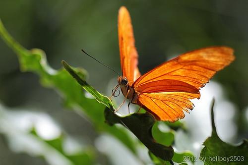 Schmetterlinge (Lepidoptera) by hellboy2503