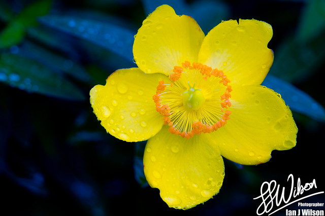 Not So Mellow Yellow – Daily Photo (6th November 2012)