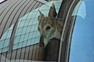 Aging looks out car rear window