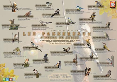 """Panneau Pédagogique """"Passereaux & oiseaux des jardins"""" N°1"""