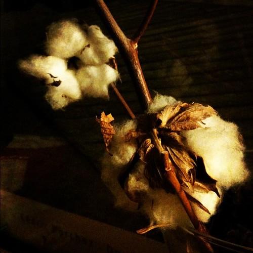 Dormir entre algodones by rutroncal