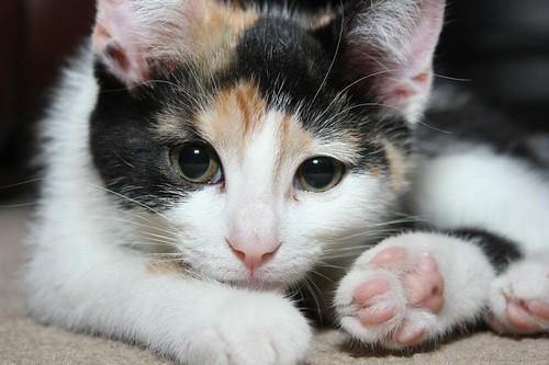 Izzy the Pondering Cat