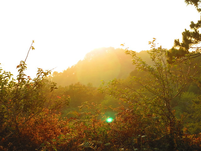 Sunset at Lake Danum