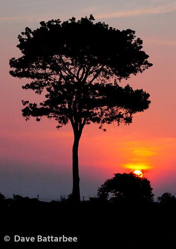 Kasane Sunset