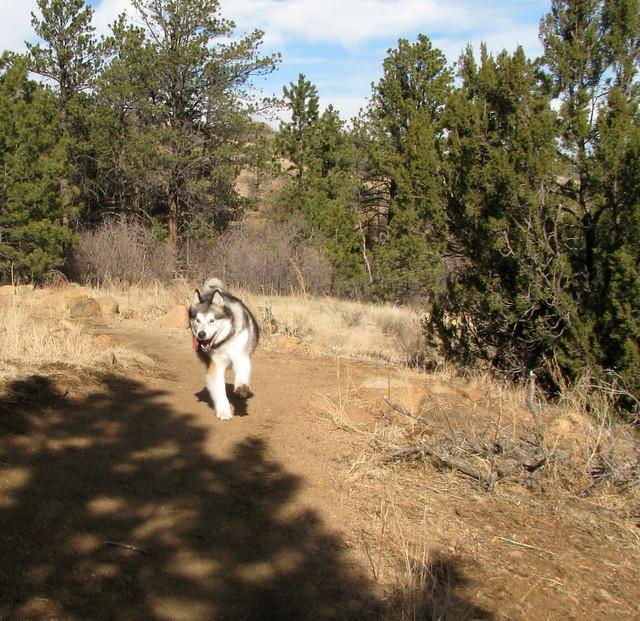 Luka runs