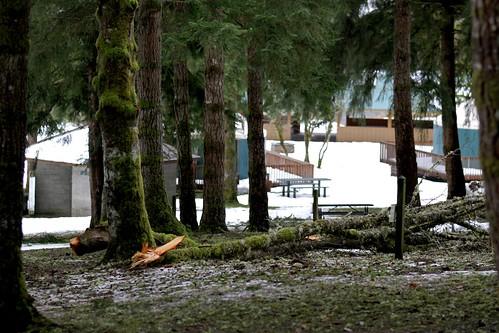 Snowmaggedon damage @ Tolt MacDonald Park by kingcountyparks