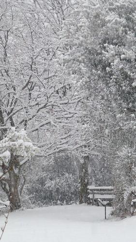 snow in our garden 5 feb 2012