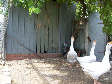 Geese_door_rsz by cmeak2011