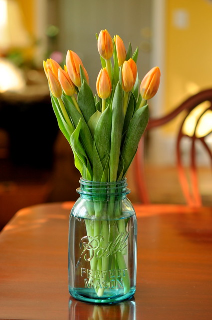 tulips in Ball jar
