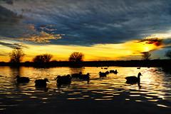 Reifel Migratory Bird Sanctuary at Sunset