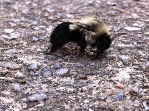 December Bee along the Gunpowder