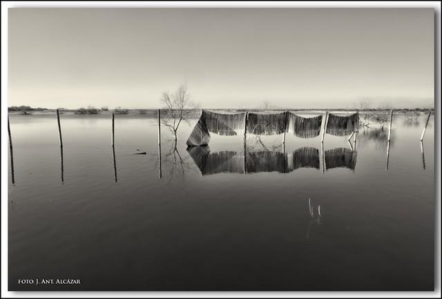 Zarzos en la laguna by dedaimiel