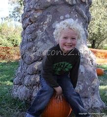 Nat on a Pumpkin