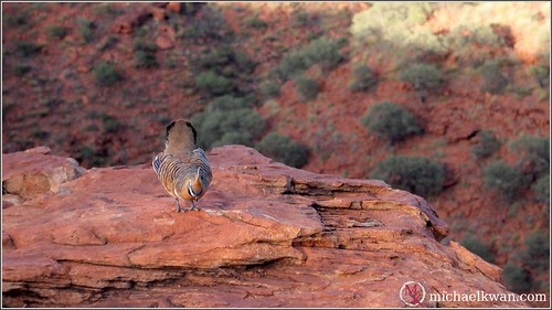Outback Wildlife (8 of 15)