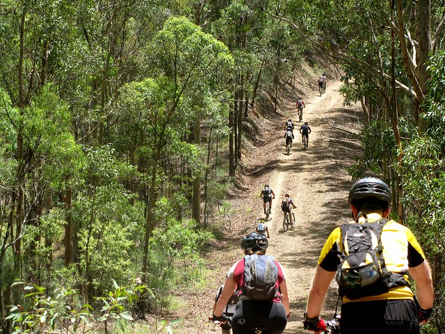 Cabbage Tree Range Road