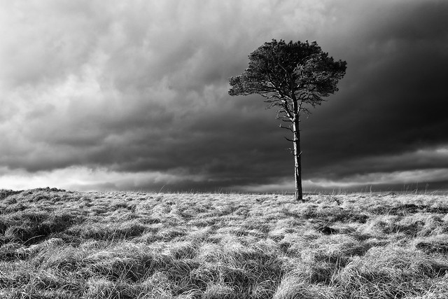 Tree in Isolation
