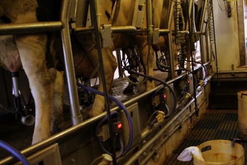 Milking Parlor