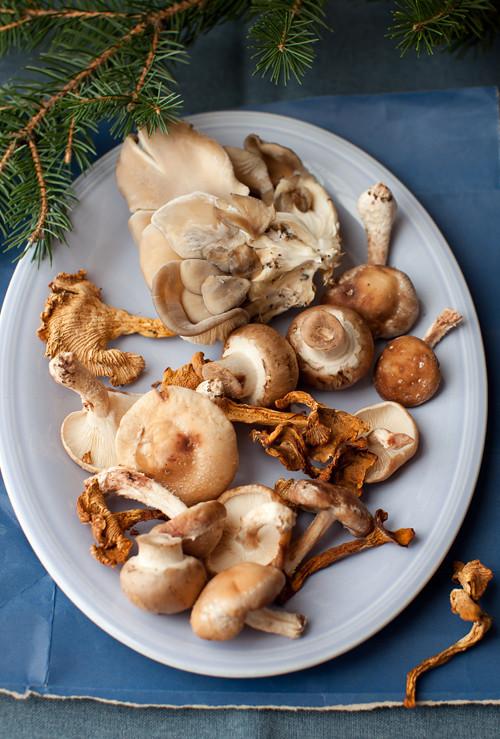 Mushroom_soup_1