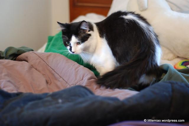 skunk 1-8-2012 11-09-24 AM