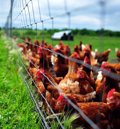 Campo Lindo Farms, Lathrop, Missouri (2009)
