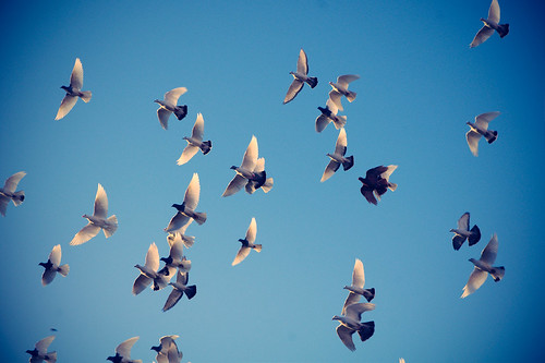 Birds in flight by Noombox