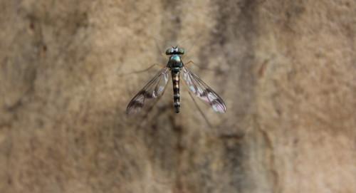 Insect Kuringai Chase National Park
