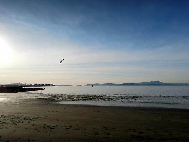 Gull over the shore