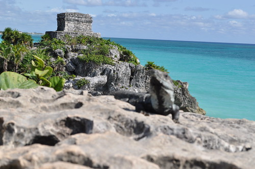 Tulum ruins - coast - iguana-3