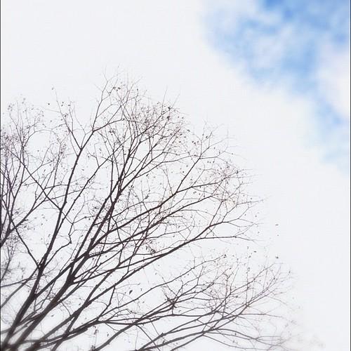 青空に憧れる今日この頃。 #iphonography #instagram #iphone4s