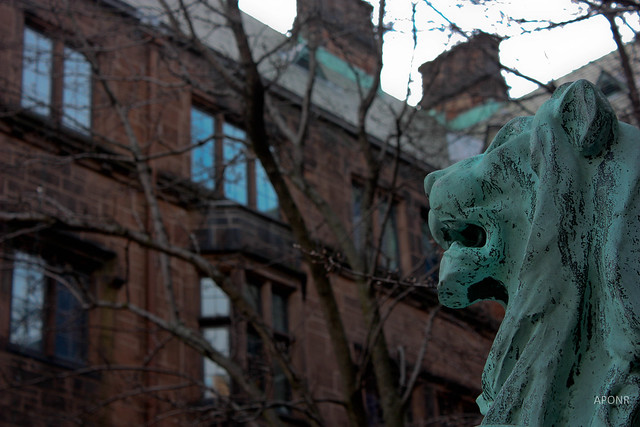 Yale Lion