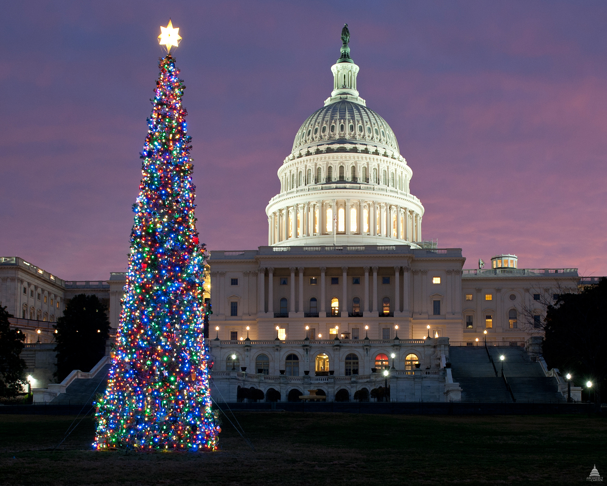 The 2011 Capitol Christmas Tree (Architect of the Capitol)
