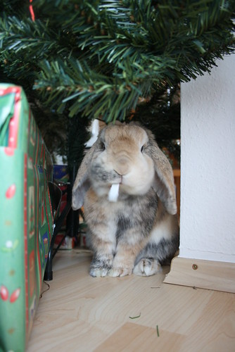 Eating the wrapping paper - 24.12.2011