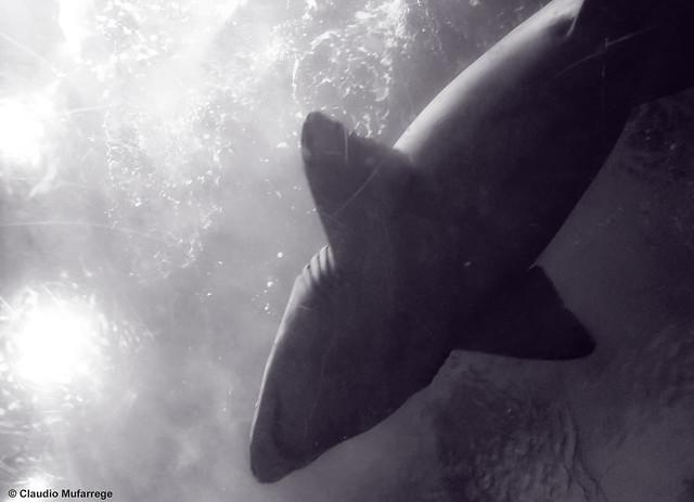 How do you not hear the music?? (Jaws) :D / ¿¿Cómo no oyen la música?? (Tiburón) :D