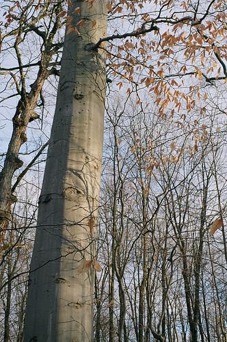 Centennial Woods by Goyo P