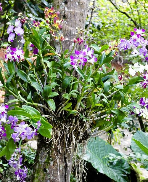 Magic Garden - Thailand, Koh Samui (10 of 42)