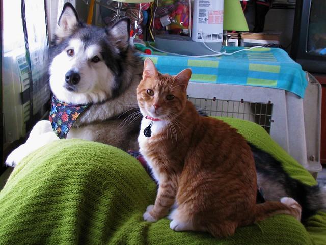 Milo and Luka