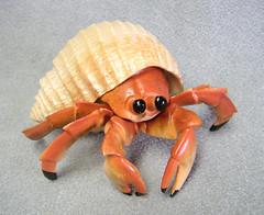 hermit-crab-plastic-f1772