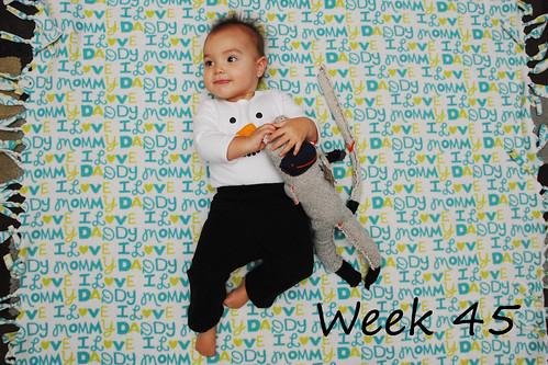 Week 45 Dec 17 2011