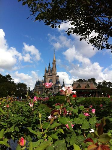 WDW Castle Roses