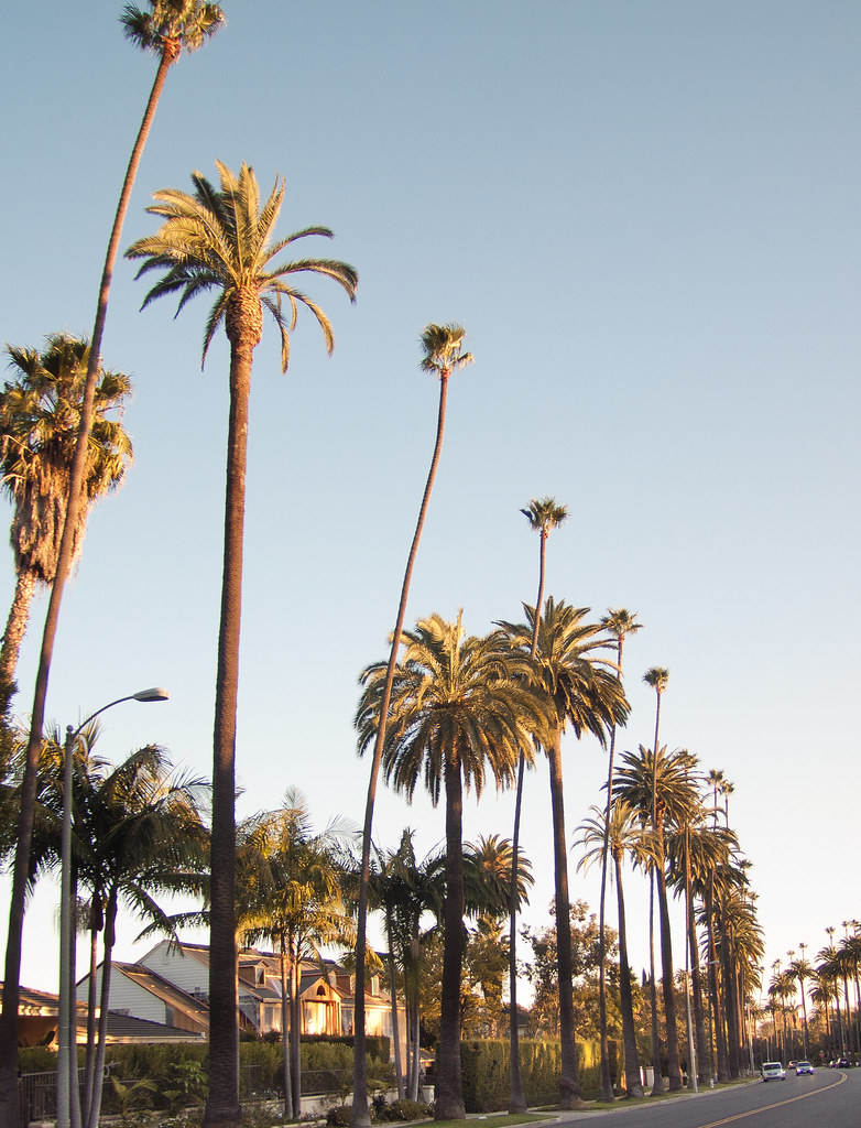 Sunset Blvd, Beverly Hills