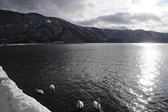 十和田湖 Lake Towada