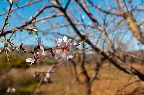 Indicios de primavera