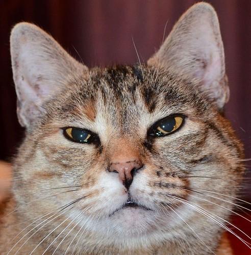Cat Attitude
