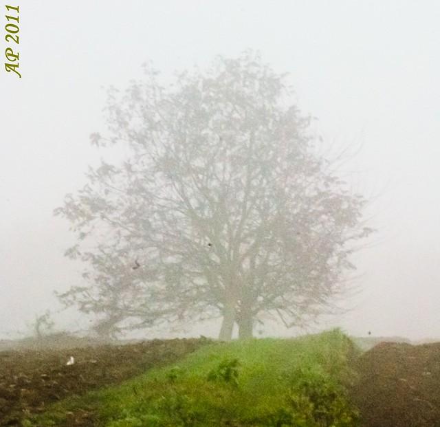 Arbre dans le brouillard II / Tree in the Fog II