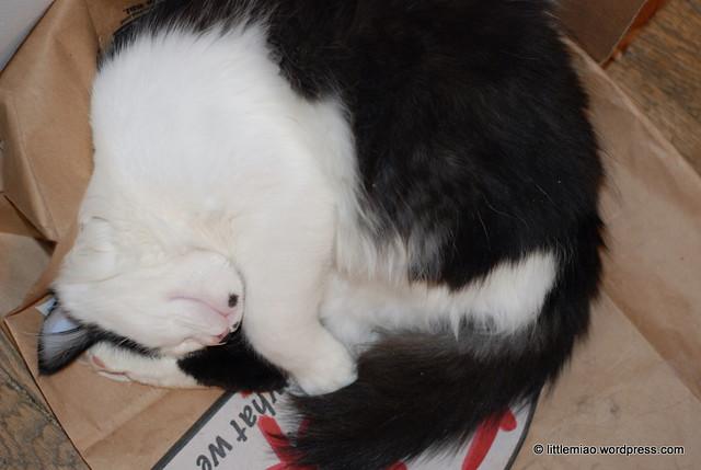 kittycrane 11-30-2011 7-14-57 PM