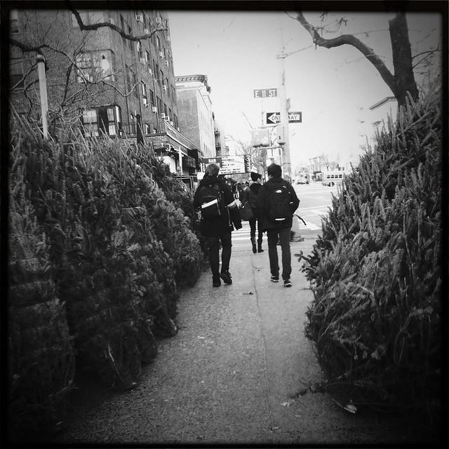 NYC Christmas tree lot